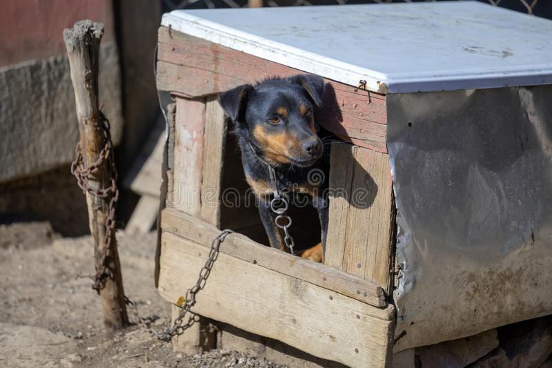 Dog on chain sitting in the dog house. And looking on the bright side of life royalty free stock photos