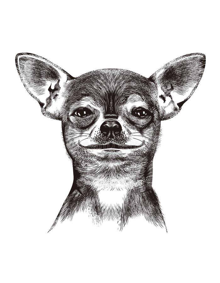 Dog Chihuahua. Illustration royalty free stock image