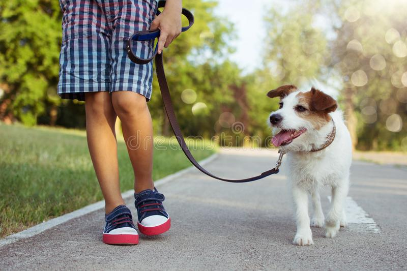 Dog and child walking at the par with blue leash. Obedience and friendship concept.  royalty free stock image