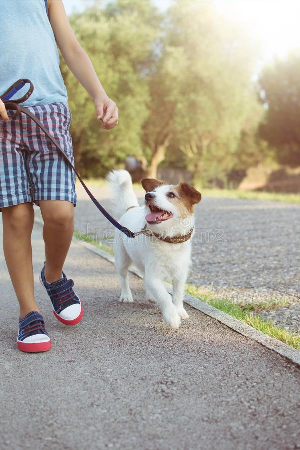 Dog and child walking during a training class at the park with blue leash. Obedience and friendship concept.  stock photo