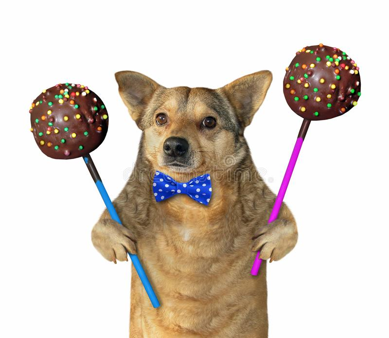 Dog with chocolate cake pops stock photos
