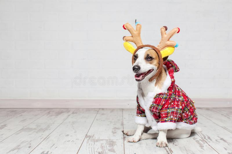 Dog in a christmas costume. Happy pet stock photo