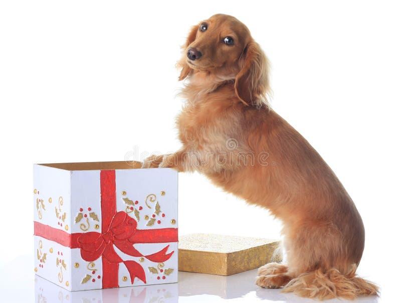 Dog and Christmas present. royalty free stock image
