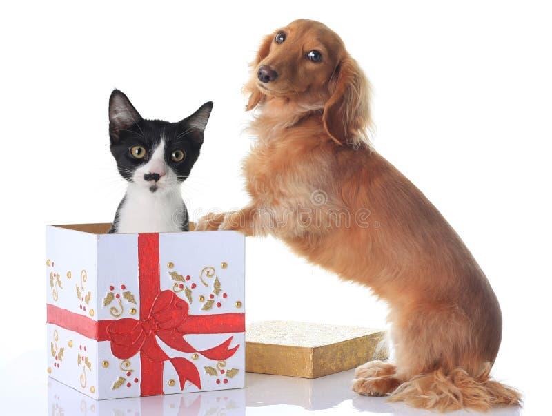 Dog and Christmas present. stock photos