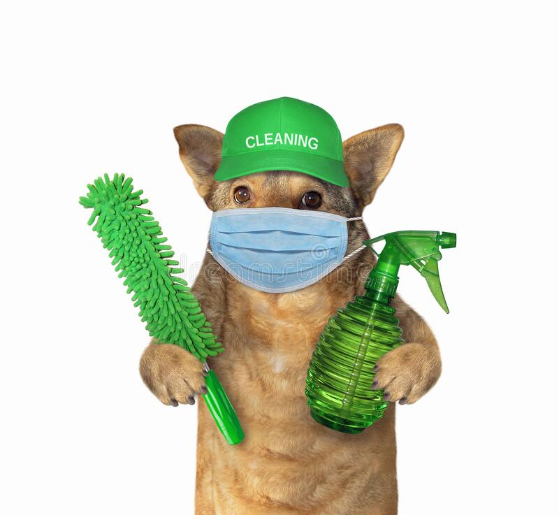Free Dog Cleaner In Face Mask Royalty Free Stock Photos - 179824078
