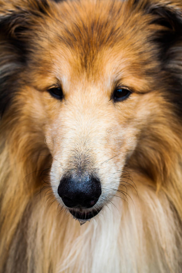 Dog close up royalty free stock photography