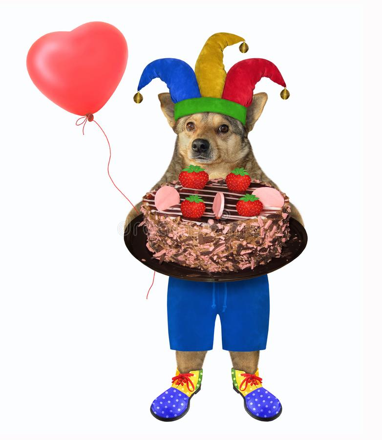 Dog clown with chocolate cake stock photography