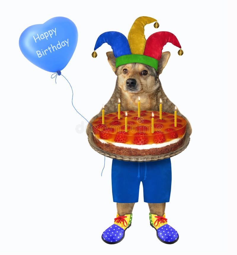 Dog clown with fruit cake stock images