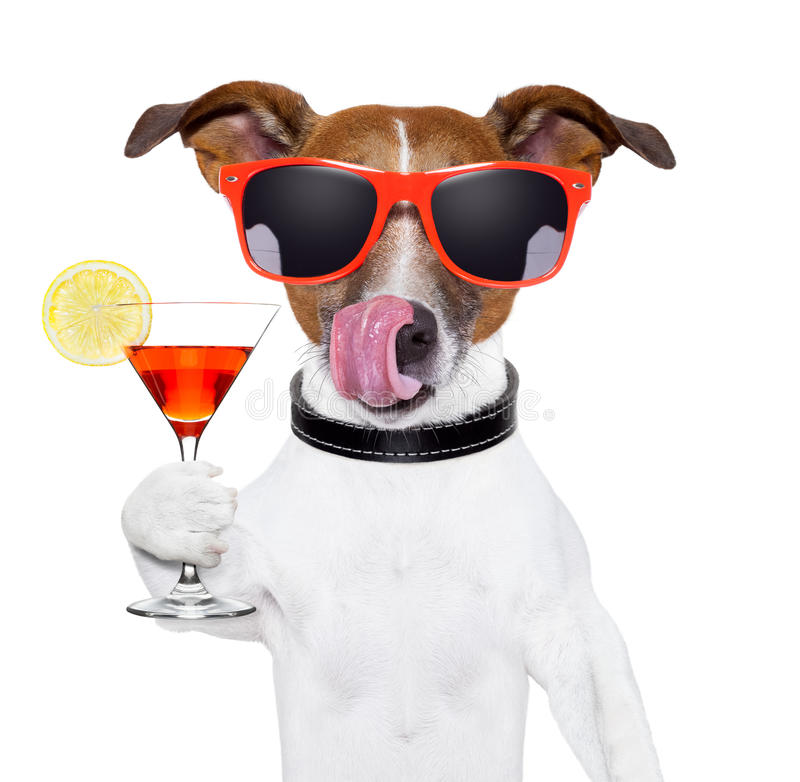 Dog With Cocktail Stock Photography