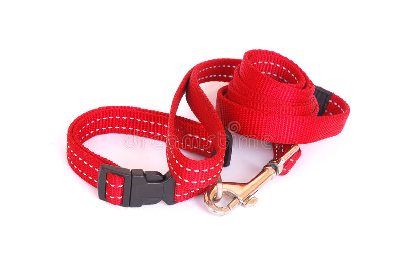 Dog collar with leash royalty free stock image