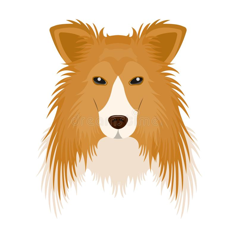 Dog, Collie breed, Scottish Shepherd. Muzzle Collie single icon in cartoon style vector symbol stock illustration web. Dog, Collie breed, Scottish Shepherd royalty free illustration