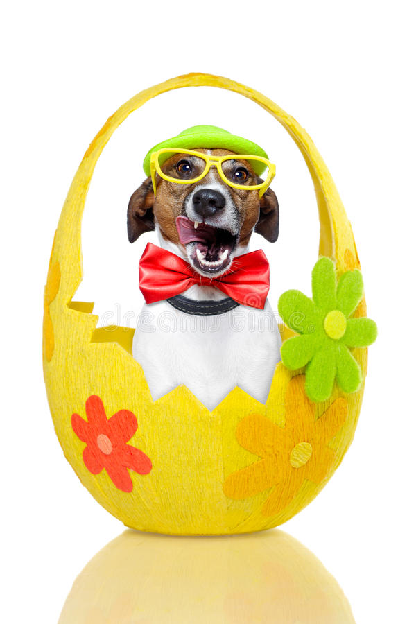 Dog in colorful easter egg. Smacking stock image