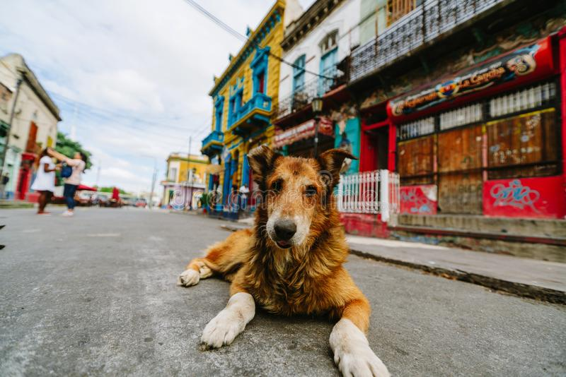 Dog in the colorful and vibrant area of La Boca, it`s Caminito in Buenos Aires. The colorful and vibrant area of La Boca, it`s Caminito in Buenos Aires royalty free stock photos