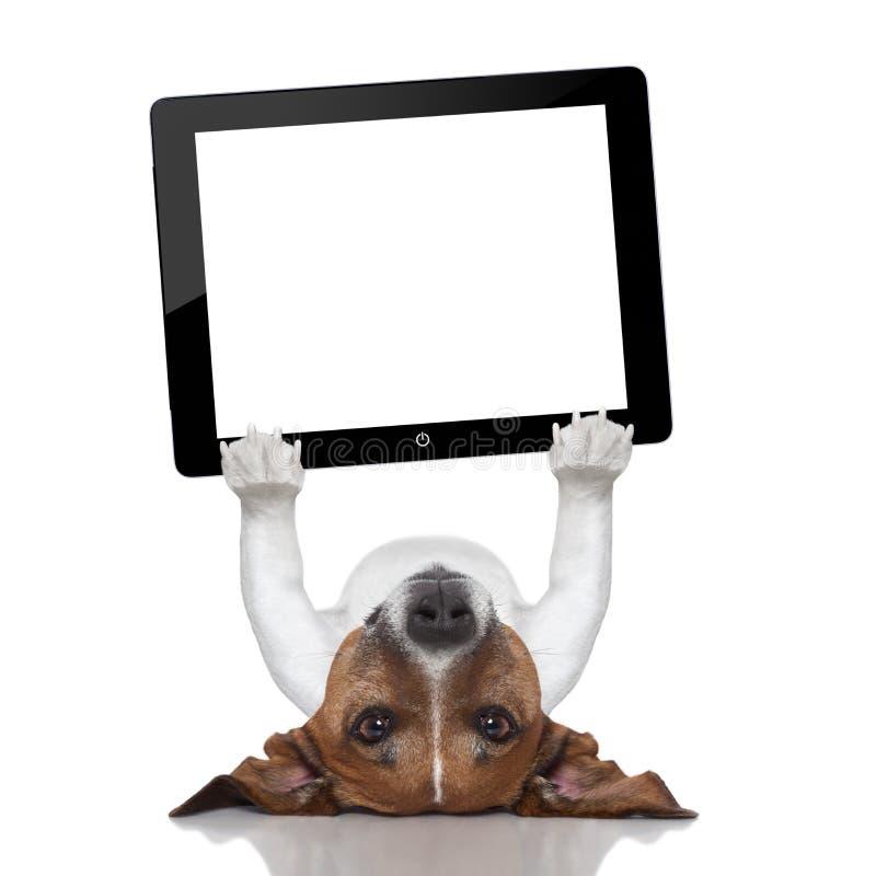Free Dog Computer Stock Image - 35017131