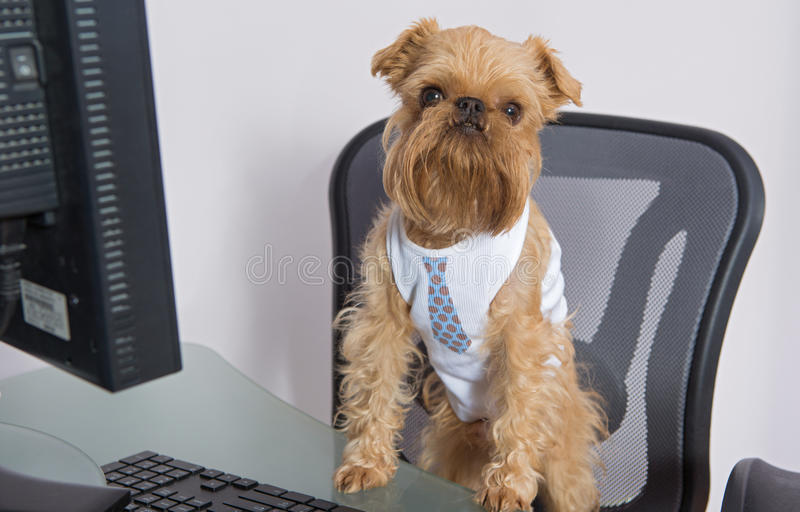 Dog and the computer stock photo