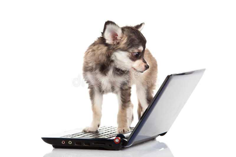 Dog and computer isolated on white background stock photography