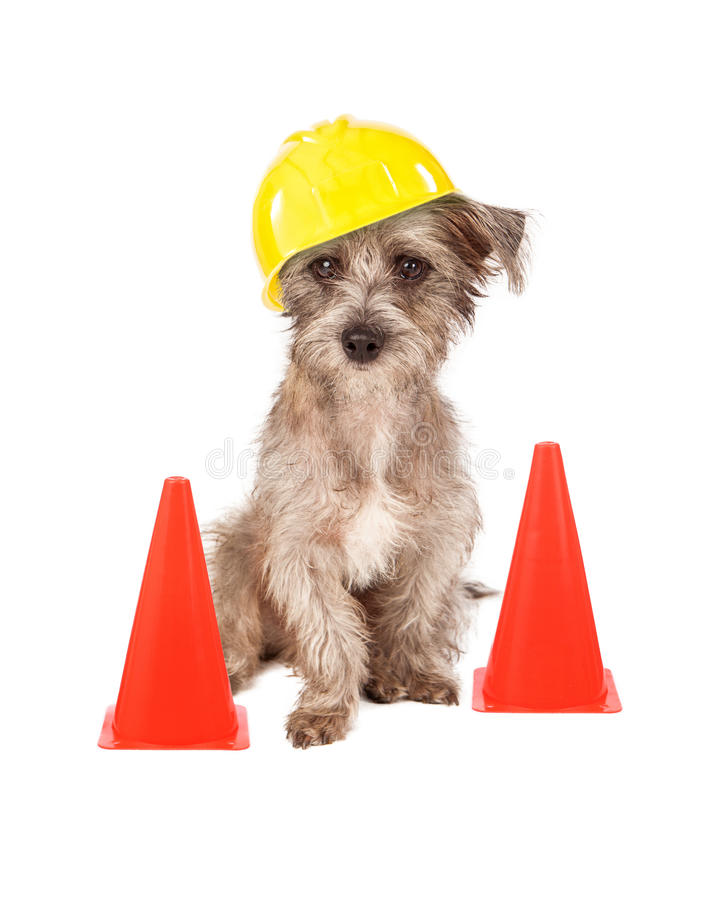Dog Construction Worker. A cute dog sitting in front of construction cones wearing a yellow hard hat stock images