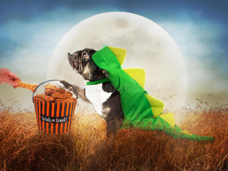 Dog in Costume on Halloween Night. Funny dog in dinosaur costume outside trick-or-treating for biscuits on Halloween night with full moon stock photo