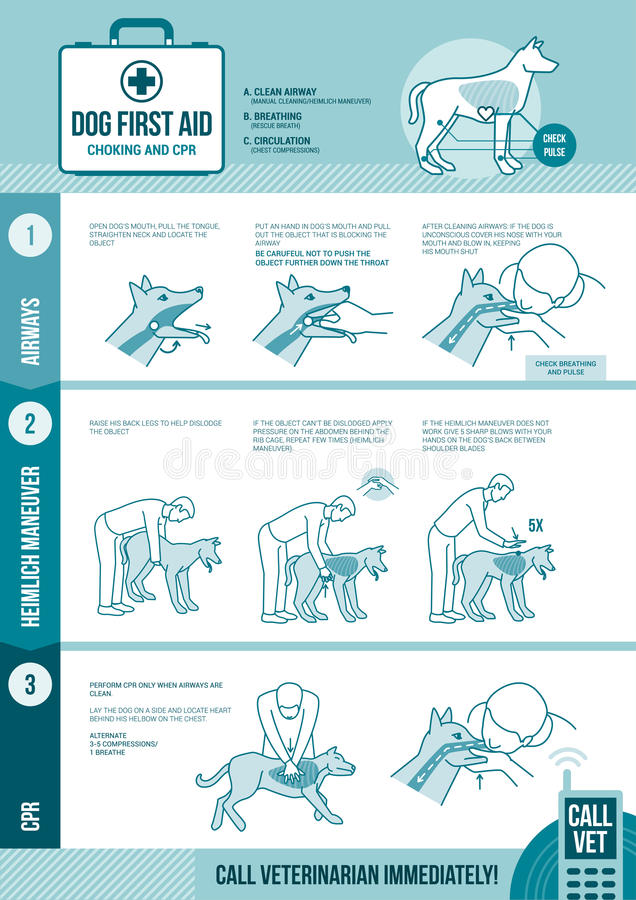 Dog cpr and first aid. Pet emergency procedure for chocking and reanimation with stick figures royalty free illustration