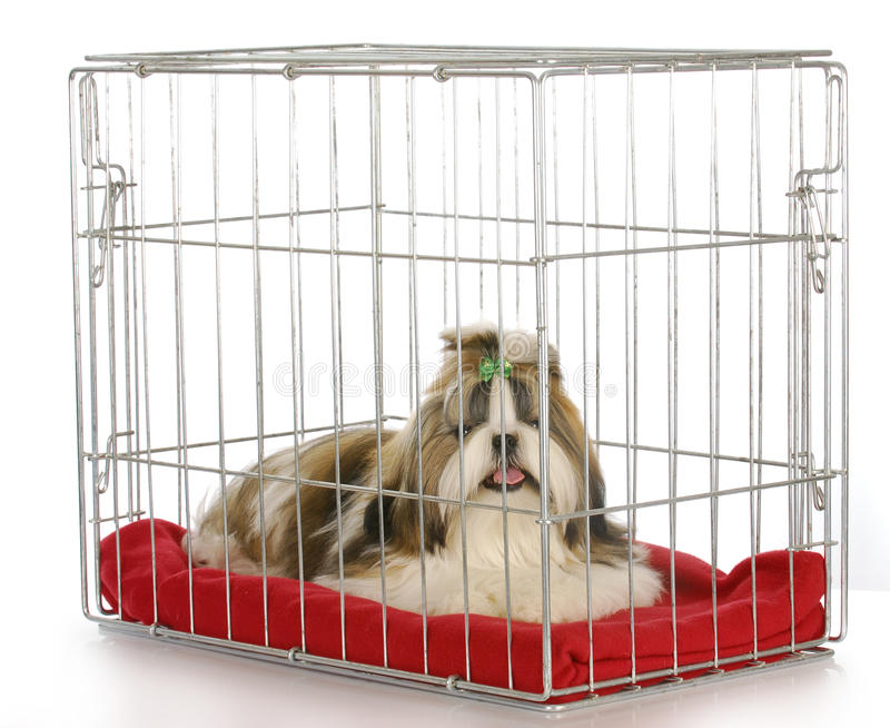 Download Dog in a crate stock photo. Image of furry, crate, lonely - 17509608