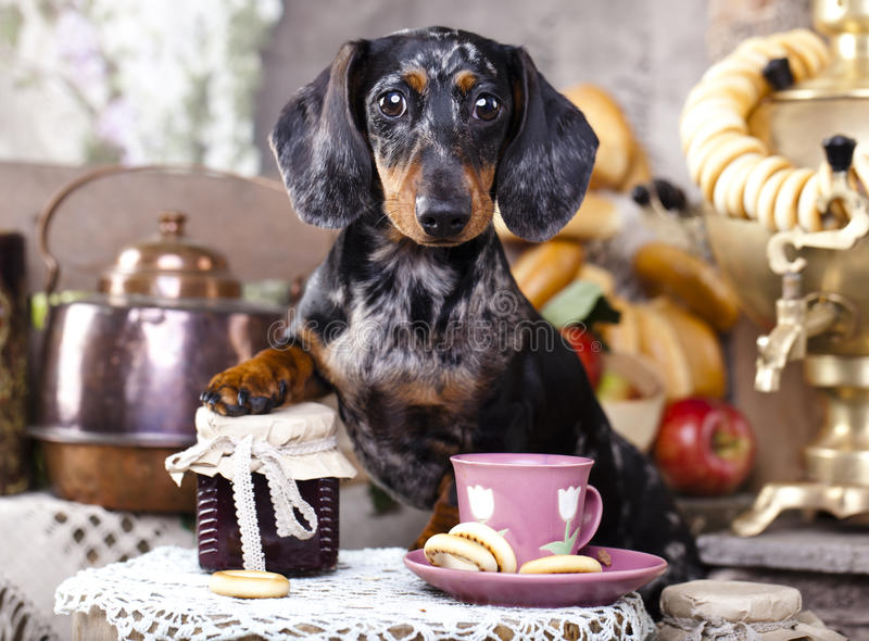 Dog and cup tea stock image