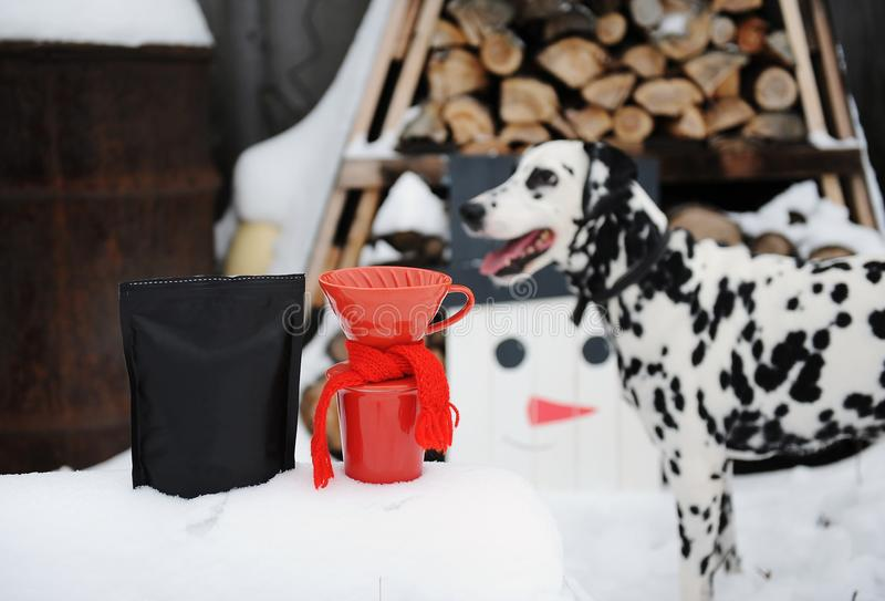 Dog dalmatian in winter yard. Brewing pour over coffee decorated with scarf. Homemade wooden snowman near woodpile stock image
