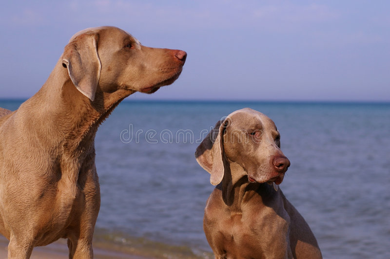 Dog day at the beach royalty free stock photos
