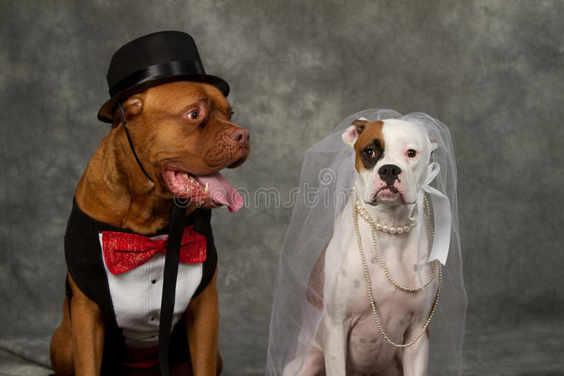 Download Dog day wedding stock photo. Image of dress, suit, costume - 22759962