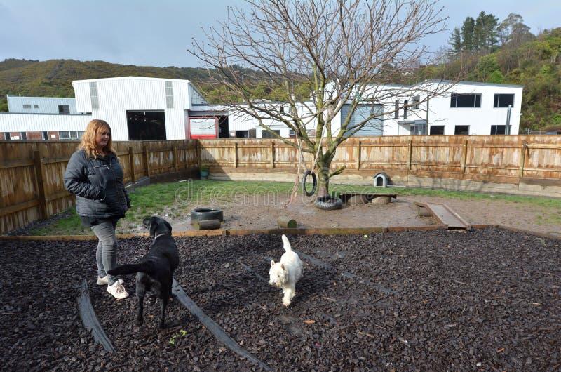 Dog daycare royalty free stock photos