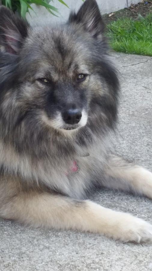 Dog days royalty free stock image