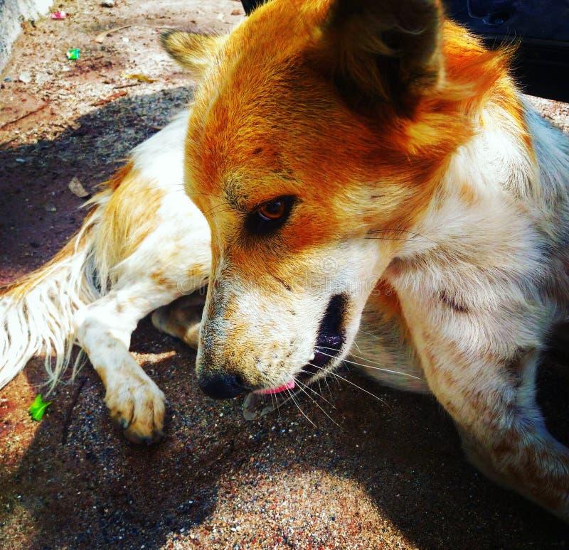 Dog& x27 de la calle; actitud de s fotografía de archivo
