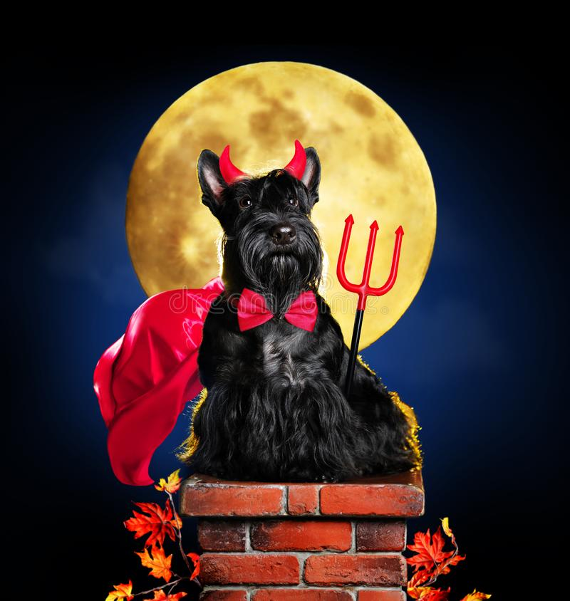 Dog in devil halloween costume. Sitting on chimney in front of big moon royalty free stock image