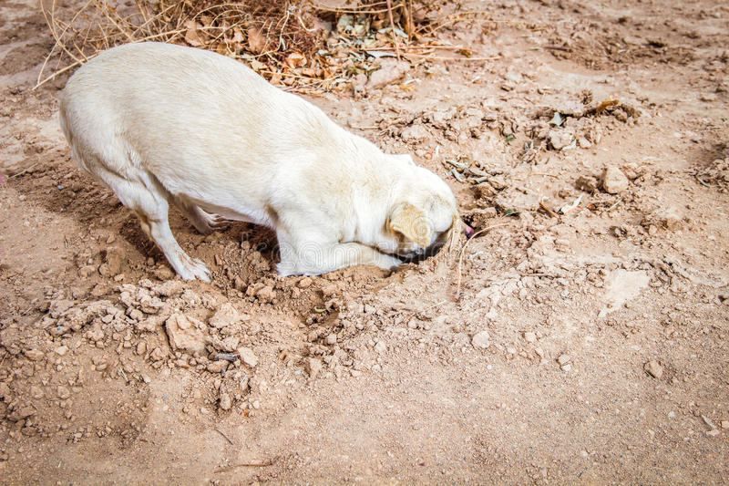 Dog digging his head in the sand stock photography