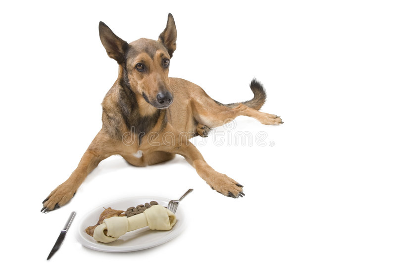 Download Dog with diner stock photo. Image of food, down, lying - 3070226