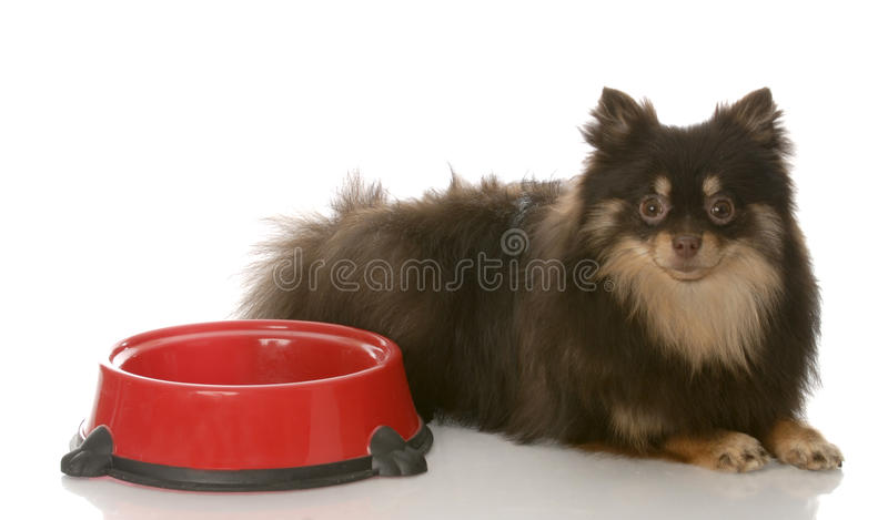 Download Dog dinner time stock photo. Image of muzzle, dish, doggy - 12996184