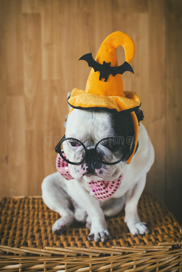 Dog disguise for Halloween. Portrait of dog in disguise for Halloween stock photography