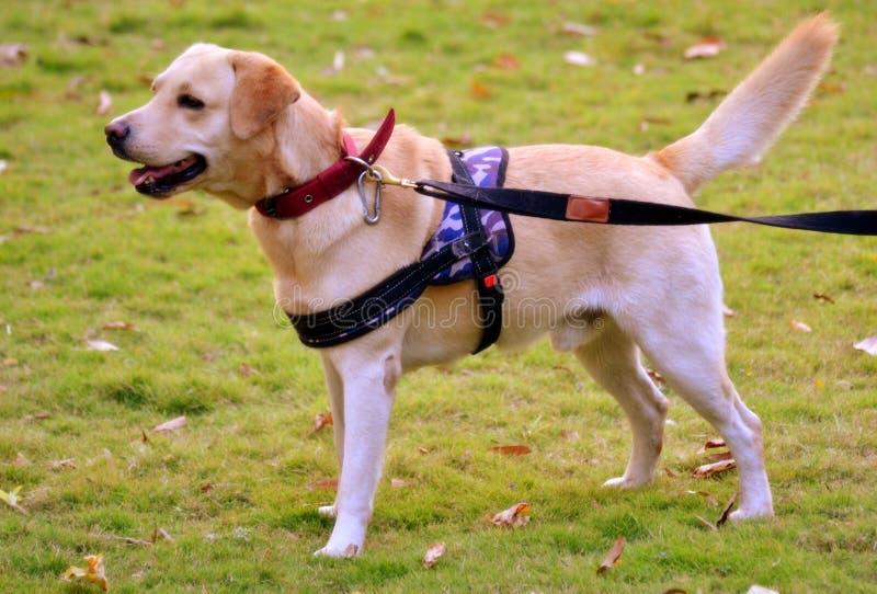 Dog, Dog Breed, Dog Like Mammal, Snout Free Public Domain Cc0 Image