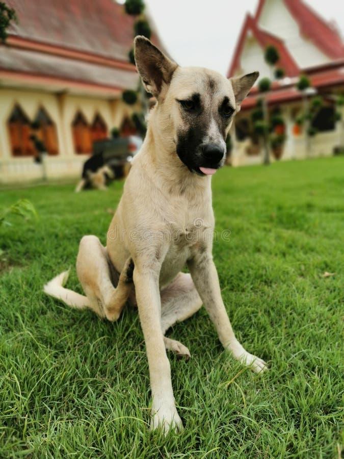 Dog. Rpt, friend, best, canny royalty free stock photos