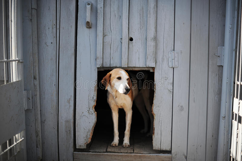 Download Dog in the doghouse stock image. Image of pets, door - 39512811