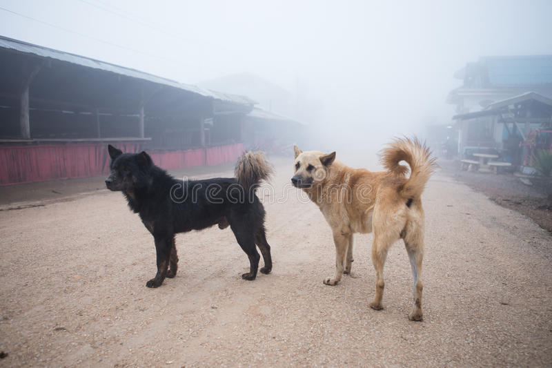 Download Dog stock photo. Image of lonely, historical, overcast - 39512380