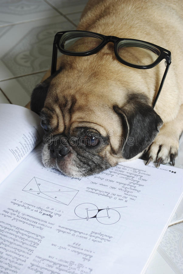Dog doing her homework royalty free stock photography