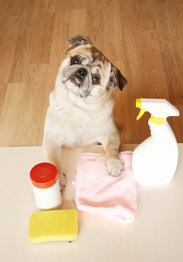 Free Dog Doing Housework Royalty Free Stock Image - 4634426
