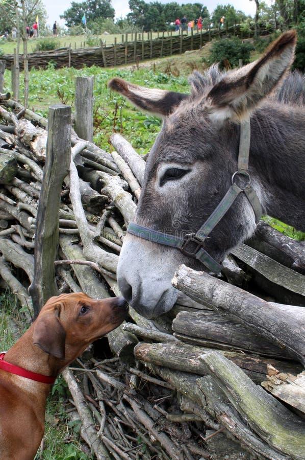 Dog and donkey stock photo