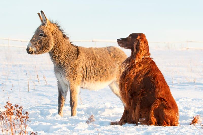 Dog And Donkey Royalty Free Stock Image