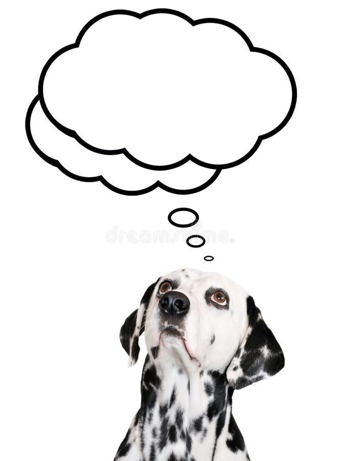 Download Dog dreams stock image. Image of animal, think, idea - 14853913