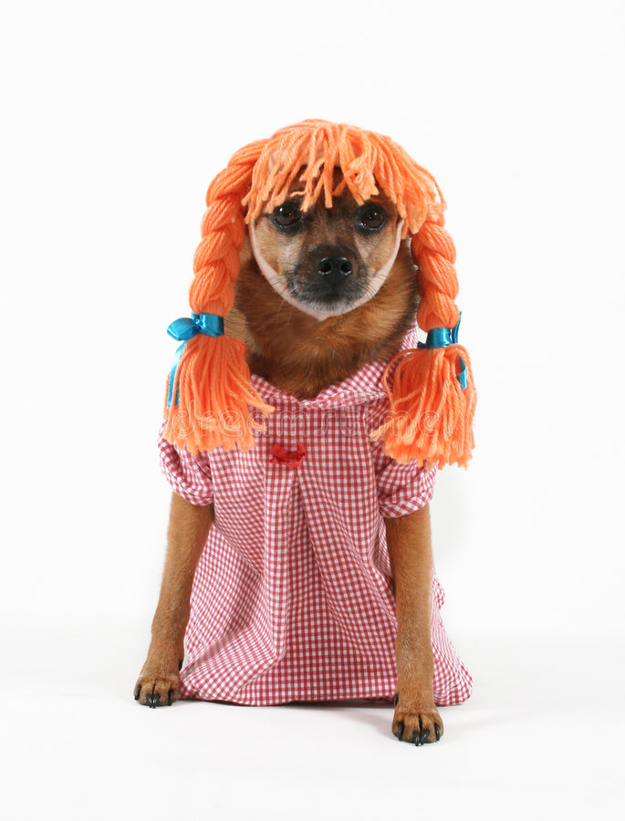 Dog dress stock photo