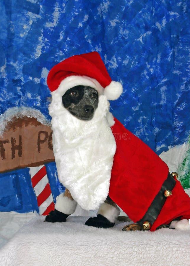 Dog dressed as santa stock image