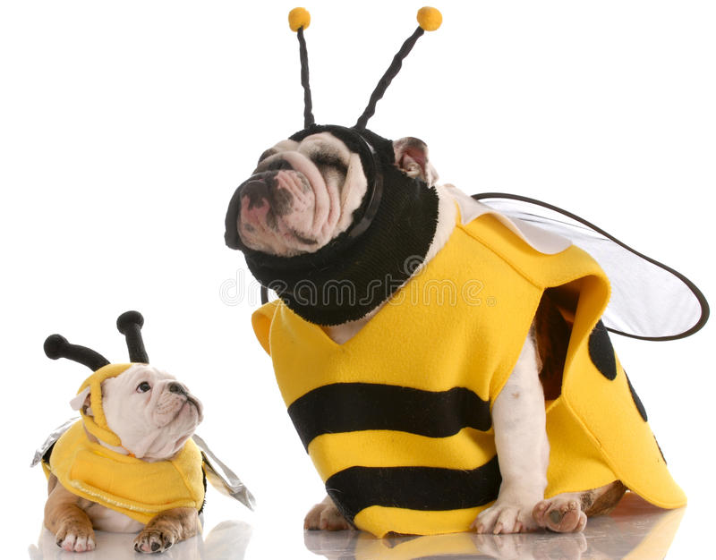 Dog dressed up as matching bees stock photo