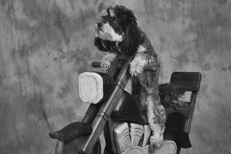 Dog and motorbike royalty free stock images