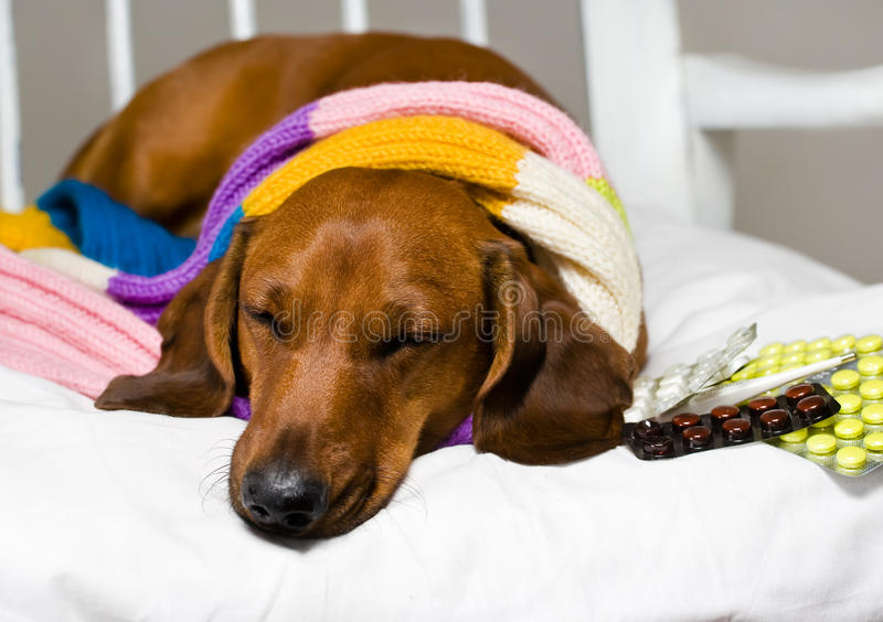 Dog And Drug Royalty Free Stock Images